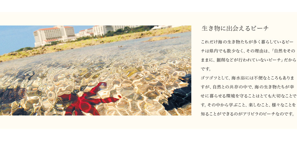 生き物に出会えるビーチ